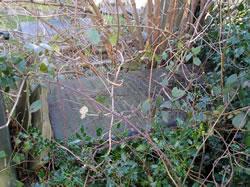Albert Bibbs Grave